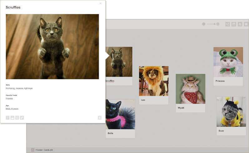 expanded card view with images of cats